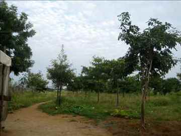 Red soil Lands 1.84 acres with 3 phase Eb ,Fully fenced , two bore wells with sweet water