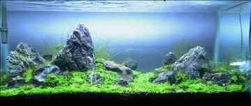 Aquascaping The Biggest Aquarium Store In Raipur