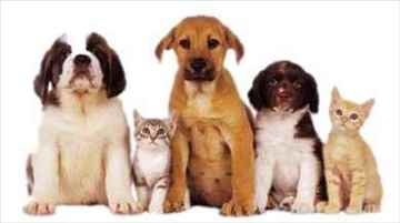 HAPPY PETS CLINIC your one stop pet store