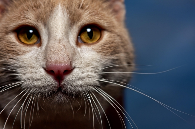 Cats use eyes not smell to search for food