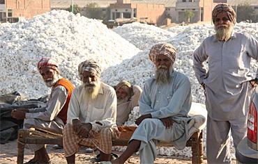 Cotton Mandi at Barnala