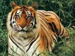 Jasrota Wildlife Sanctuary in Jammu