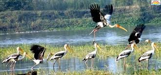 Surinsar Mansar Wildlife Sanctuary in Jammu