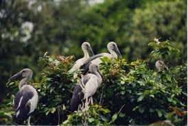 Karnala Bird Sanctuary in Panvel