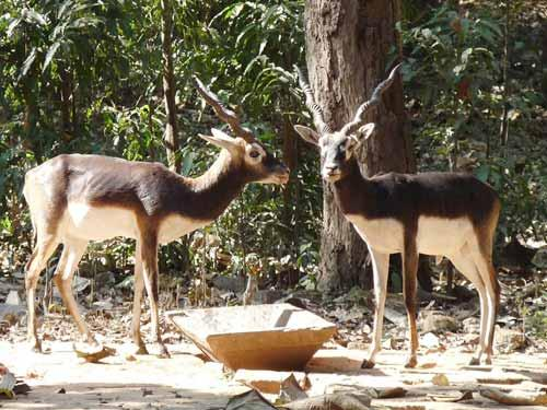 Deer Park in Burdwan