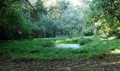 Joypur rain forest