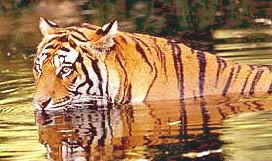 Wildlife Sanctuaries in Jammu