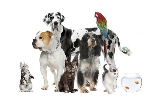 Pet Shops in Ambala