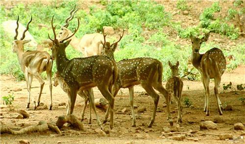 Wildlife spots of Andhra Pradesh