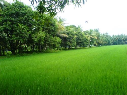 Economy in Machilipatnam