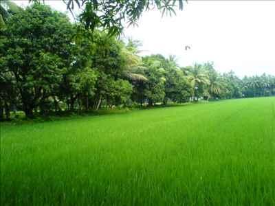 http://im.hunt.in/cg/Andhra/Machilipatnam/City-Guide/m1m-agriculture-machilipatnam.JPG