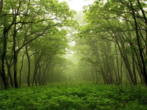 Forests in Arunachal Pradesh