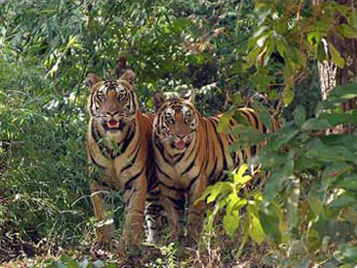 Wildlife Sanctuaries in Arunachal Pradesh