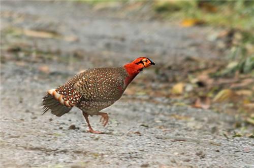 Flora and Fauna in Dihang Dibang Biosphere Reserve