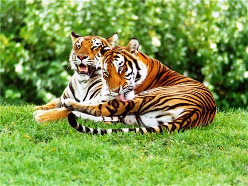 Conservation of Pakhui Tiger Reserve
