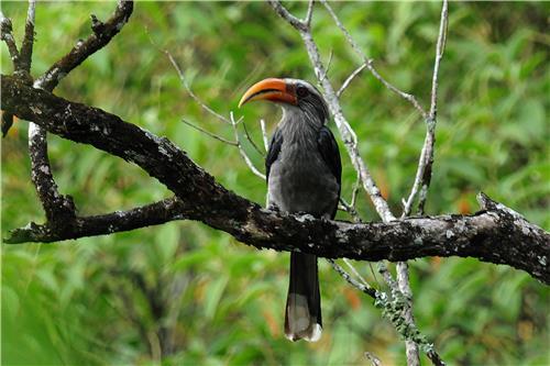 Fauna in Namdapha National Park