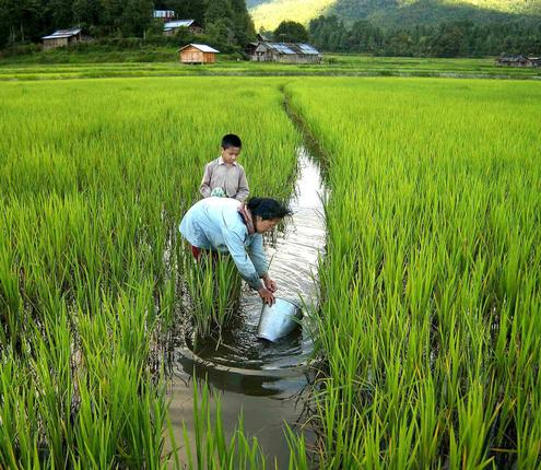 Agricultural Practices in Ziro