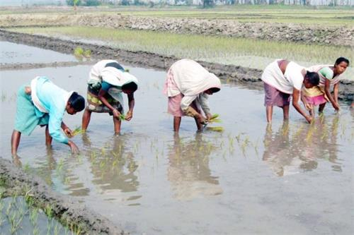 Agriculture in Assam