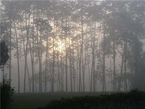 Top Places in Assam