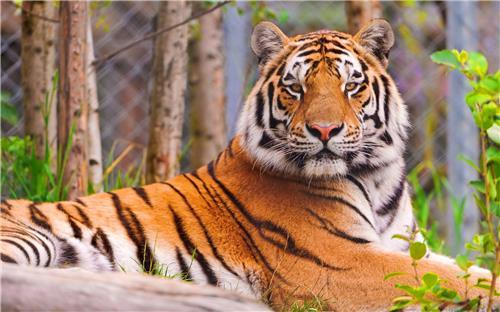 Fauna of Orang National Park