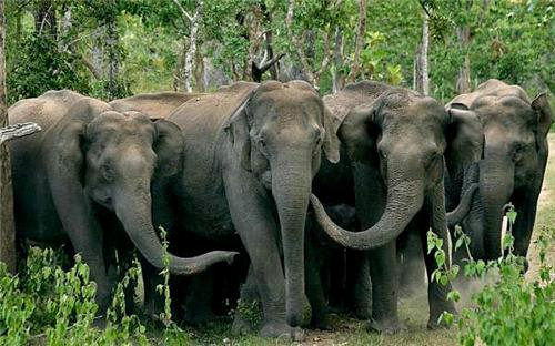 Wildlife sanctuaries in Tezpur