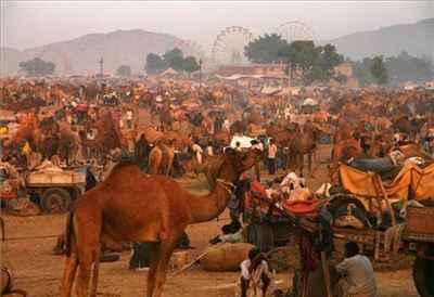 Dadri festival