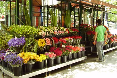 Florist in Bharuch