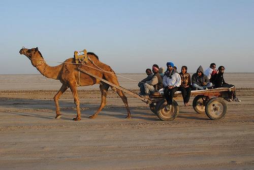 Camel Ride at Rann Utsav