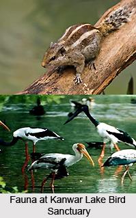 Wildlife in Begusarai