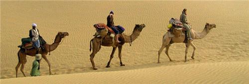 Desert and Camel Safari in Bikaner