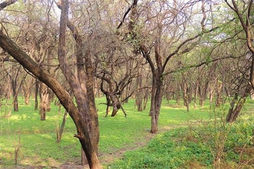 Natural places for trekking near Chandigarh