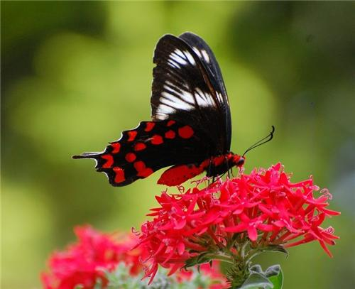 Inside the Butterfly Park in Chandigarh
