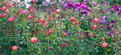 Festival of Gardens in Chandigarh