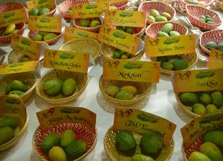 The Mango Festival in Chandigarh