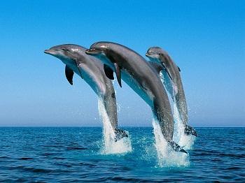 Dolphin World near Chennai