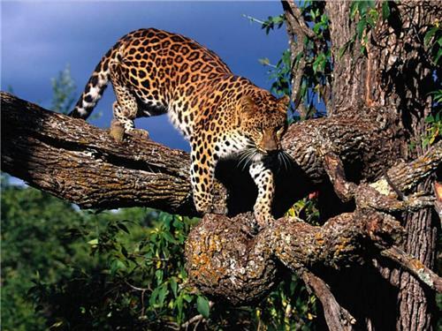 Wildlife in Chhattisgarh