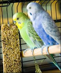 Pet Shops for Birds