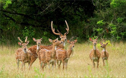 Wildlife in Dewas