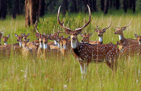 Tourism in Dewas