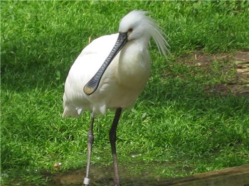 Kalakadu wildlife Sanctuary