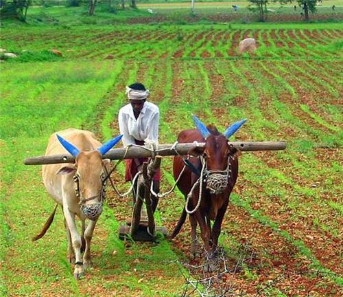 Economy of Dadra and Nagar Haveli