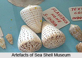 Sea Shell Museum