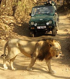 Gir National Park near Diu