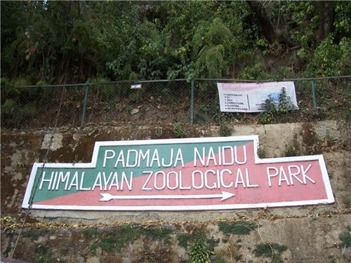 Mesmerizing Trip at  Padmaja Naidu Himalayan Zoological Park in Darjeeling
