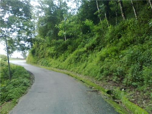 Way to Romatic Destination Takdah in Darjeeling