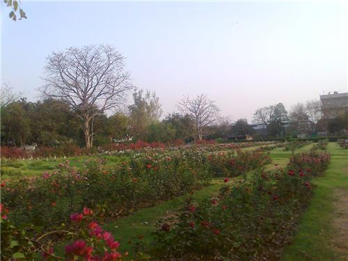 National Rose Gardens