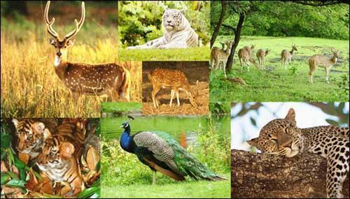 Eco Tourism in Hazaribagh