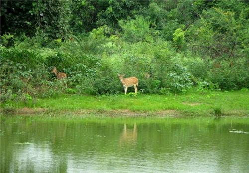 Exquisite wildlife and fauna in Dholpur