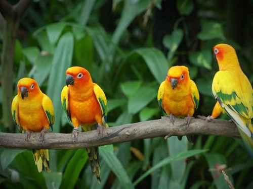 Wildlife Sanctuary in Dhule