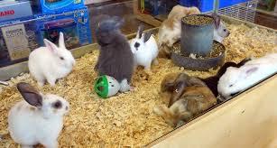 Pet Shops in Dombivli